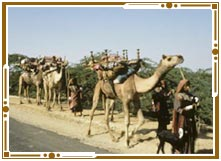 Local transportation in Jaisalmer