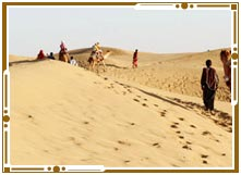 Safari in Jaisalmer